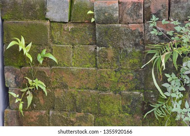 detailed texture brick mossy walls background