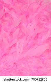 Detailed texture of soft gentle pink feathers