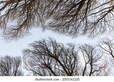 Detailed tree branches or Heavenly road, Russia