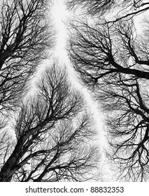 Detailed tree branches or Heavenly road (black and white) - Russia