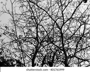 Detailed tree branches of a tree with some leaf - close up.