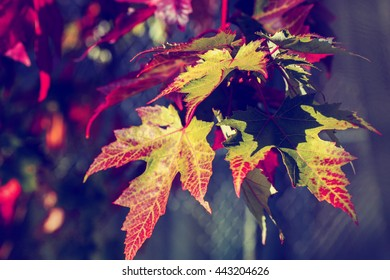 Detailed tree branches with yellow leaves, Fall background in red tones, autumn leaves and blue sky, Abstract natural backgrounds with beauty bokeh