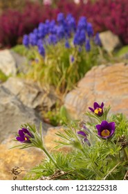 Detailed view of a flowers of various colors in a botany garden with a blossoms of violin crocus on foreground