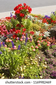 Detailed view of a garden with various flowers of various colors