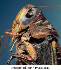 A detailed view of the upper side portion of the chitin  exoskeleton locusts