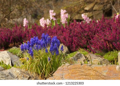 Detailed view of a  various flowers of various colors in a botany garden