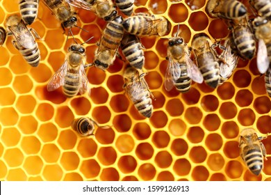 detailed view of working bees in a bee hive
