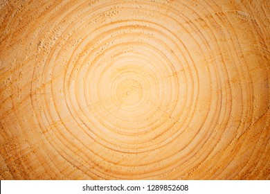 Detailed warm  brown tree trunk or stump. Rough organic texture of tree rings and end grain.