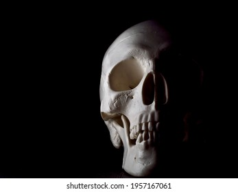 Detailed white human skull model half shrouded in shadows on black background