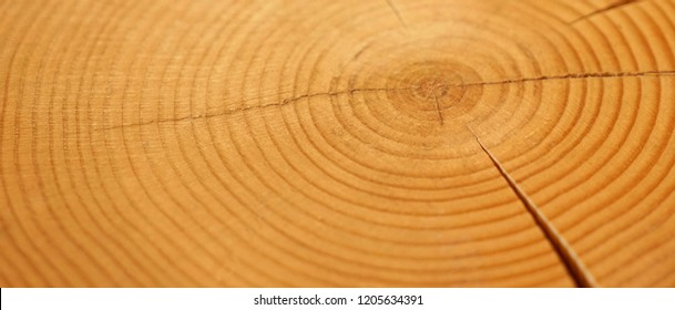 Detailed wood rings texture. Smooth detailed cracked wood textured tree ring background. Piece of round wood with cracks.