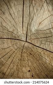 Detailed wood texture/Wood texture/Macro nature
