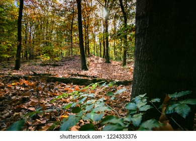 details ande scene of an autumn forest with canopy and warm colors