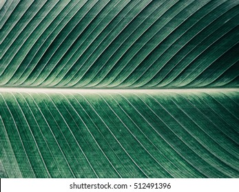 Details of big green leaf, Close up of leaf texture background, Abstract green line background, Vintage tone