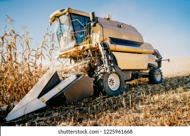 Details of combine harvester collecting corn and harvesting during autumn season