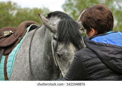 Details of horse body and equipment. Gray horse with rider in cavesson- bitless bridle doing groundwork.