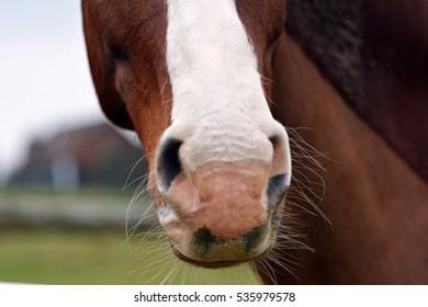 Details horses