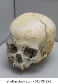 details of a human skull