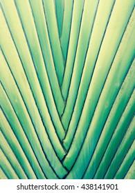 Details of leaf stalk of palm.