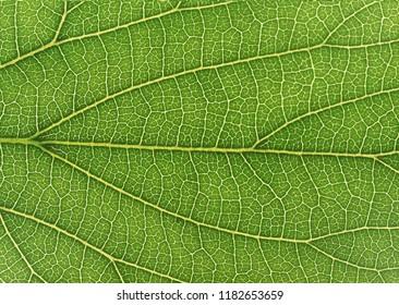 Details in leaf tree