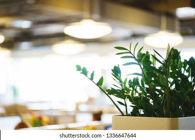 Details of the modern office. Green plants in plastic pots on the shelf. The organization of space in the workroom. Stylish chairs and tables in the interior.