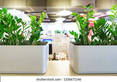 Details of the modern office. Interior and empty working public space. Green plants, furniture parts for employees. Stylish chairs and tables in the interior.