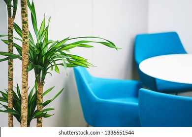 Details of the modern office. Tropical palm tree and the interior of a small working space. Turquoise chair at an empty white table organization of space in the workroom.