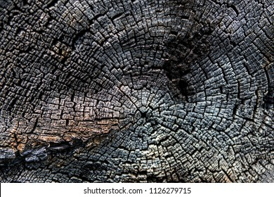 Details on the surface of charcoal. Partially burnt wood retains its structure and forms a grim pattern. Beauty of burned wood as background.