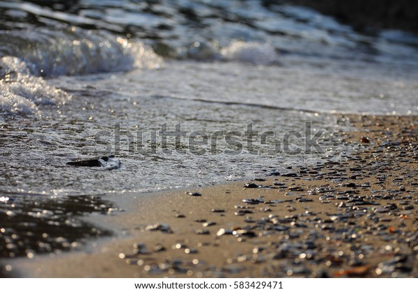 Details from the sea. Seascape