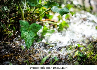 Details of small plant near water running