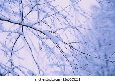 Details of snowy tree branches in a winter landscape.