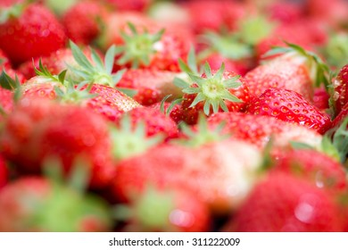 Details of strawberries in a box in a greenhouse in Breda, Netherlands, very fresh and standing ready for transport just  after harvesting