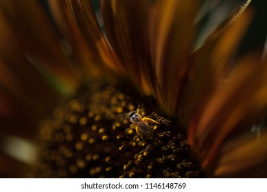 Details of a sunflower in the garden.