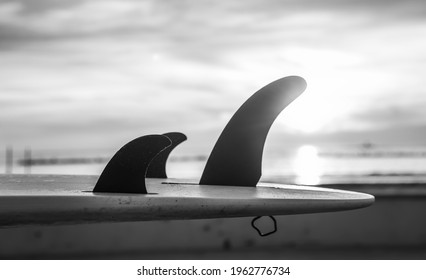 Details of surfboard fins by the sea at sunset. Black and white effect