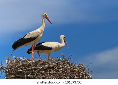 details with two white storks on nest
