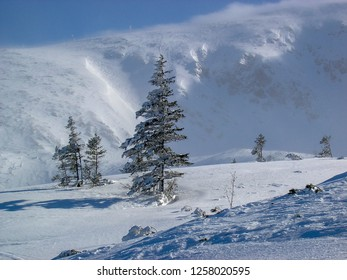 Determine the direction of the world of wood. Asymmetrical tree in the mountains in winter, around a lot of snow.