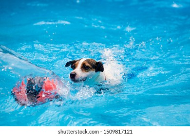 Determined dog swimming after basketball in swimming pool