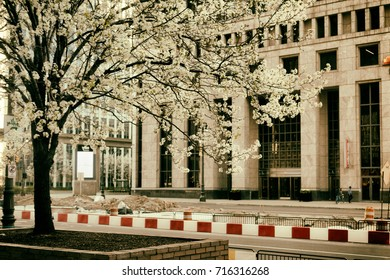 Detroit, Michigan, USA. Cherry Blossoms bloom in front of a historic building in downtown Detroit. 2016.