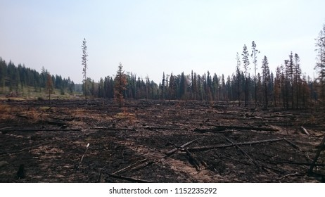 Devastation caused by a forest fire near Dog Creek, BC.
