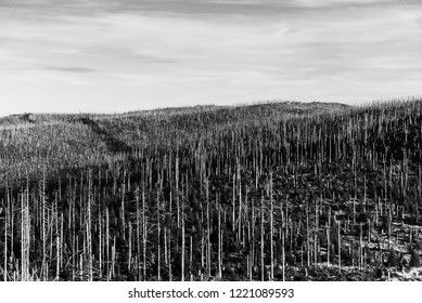 Devasted forest in caues of bark beetle infestation. Sumava National Park and Bavarian Forest, Czech republic and Germany. View from Tristolicnik, Dreisesselberg, to Plechy, Plockenstein. Black and