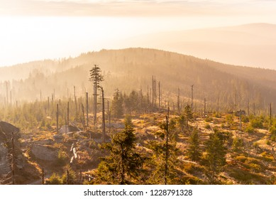 Devasted forest in caues of bark beetle infestation. Sumava National Park and Bavarian Forest, Czech republic and Germany. View from Tristolicnik, Dreisesselberg.