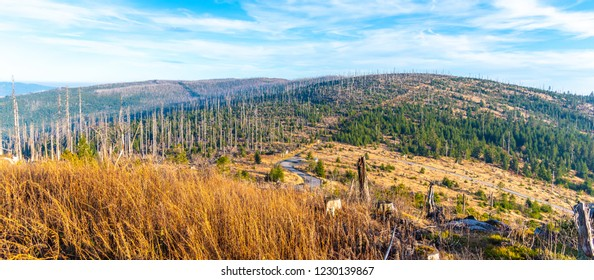 Devasted forest in caues of bark beetle infestation. Sumava National Park and Bavarian Forest, Czech republic and Germany. View from Tristolicnik, Dreisesselberg, to Plechy, Plockenstein.