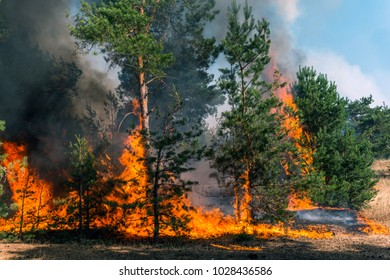 Development of forest fire. Flame is starting damage of trunk