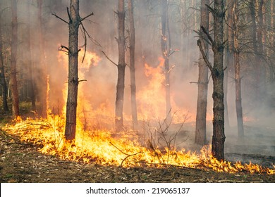 Development of forest fire. Flame is starting trunk damage
