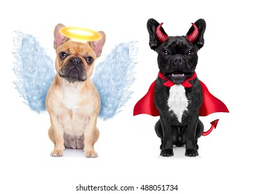 Devil and Angel fawn french bulldog dogs sitting side by side deciding between right and wrong , good or bad, isolated on white background