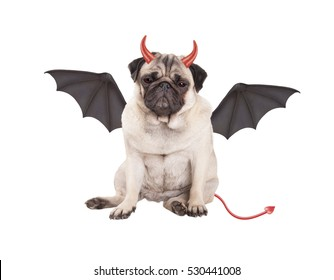 devilish cute pug puppy dog sits dressed up as devil for Halloween, isolated on white background