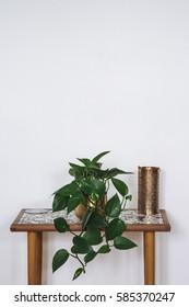 Devils Ivy on vintage wooden table