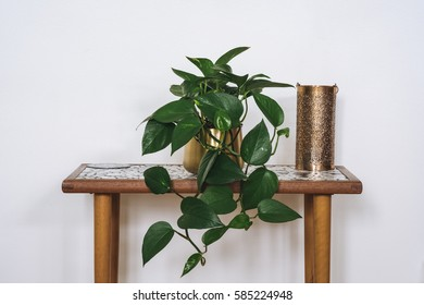 Devil's ivy plant of a table next to a candle holder