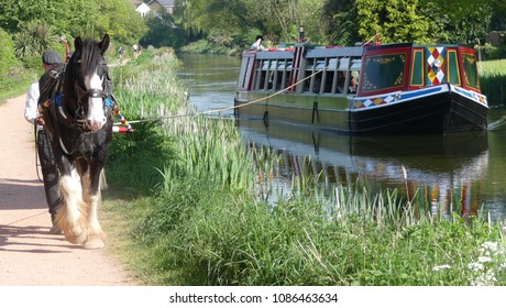 Devon, England - May 8 2018: The Tiverton Canal Company horse drawn barge travelling on the Grand Western Canal