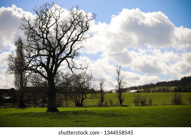 Devon fields and countryside