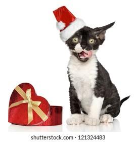 Devon Rex kitten in Santa Christmas red hat yawn on a white background